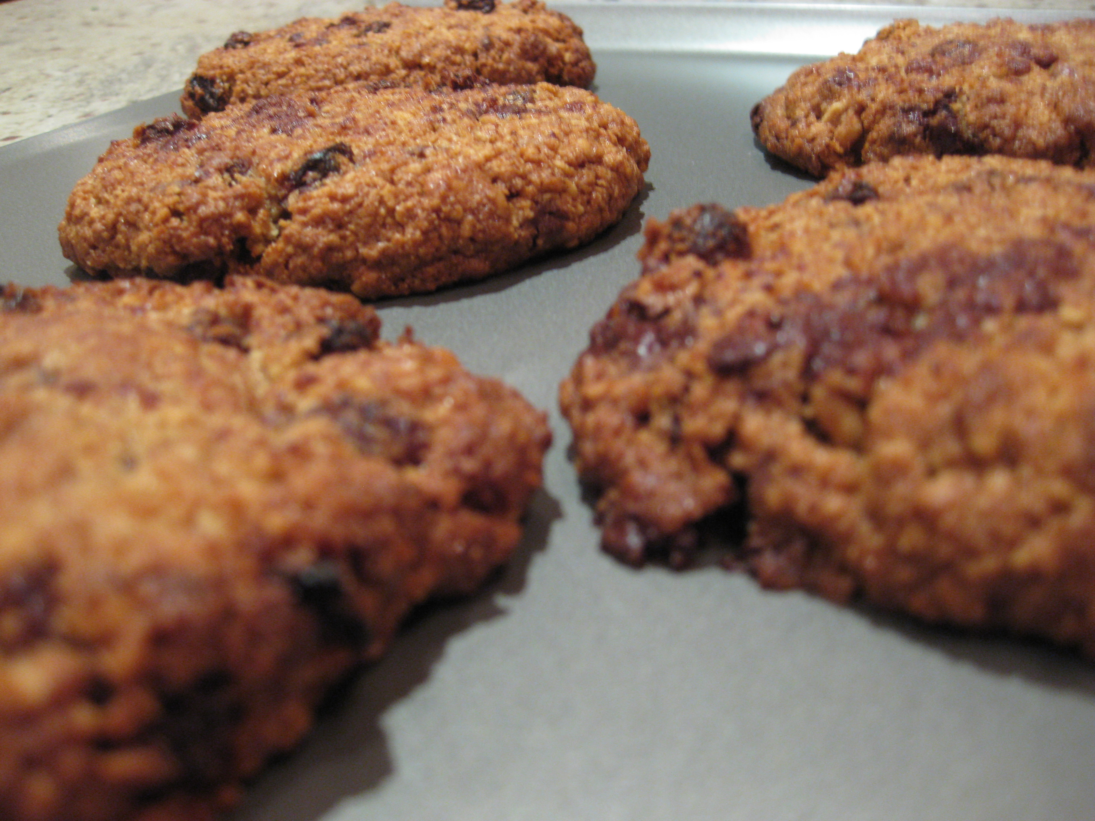 oaty_chocolate_walnut_raisin_cookie