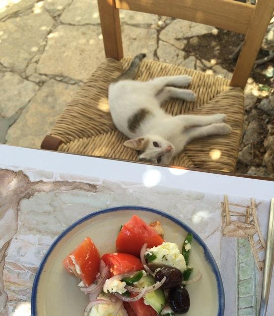 Cat Folegandros
